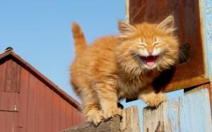 laughing-kitten-104945