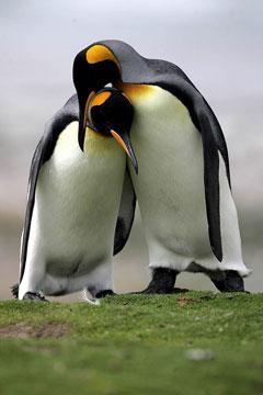 penguin-closeness